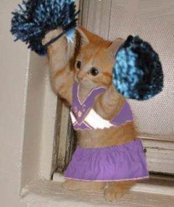 yay-cat